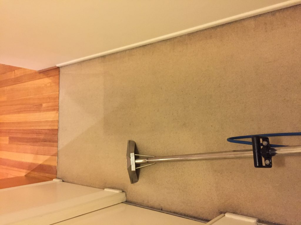 Local Carpet Cleaning in Melbourne suburb. Removed suborn stains from carpet.